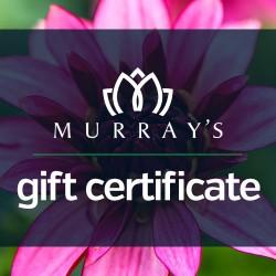 Murray's Gift Certificate